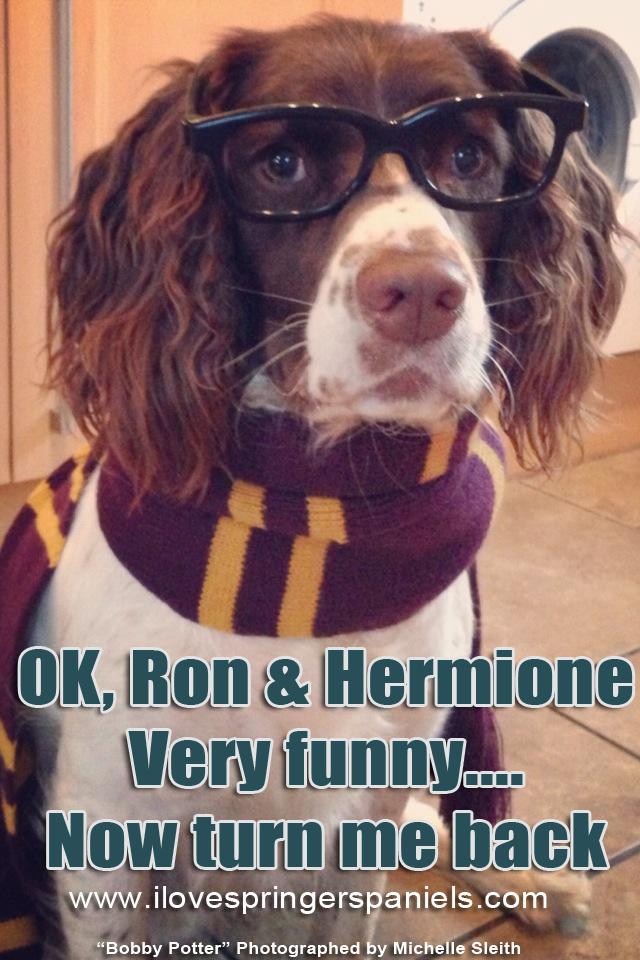 Bobby Potter!