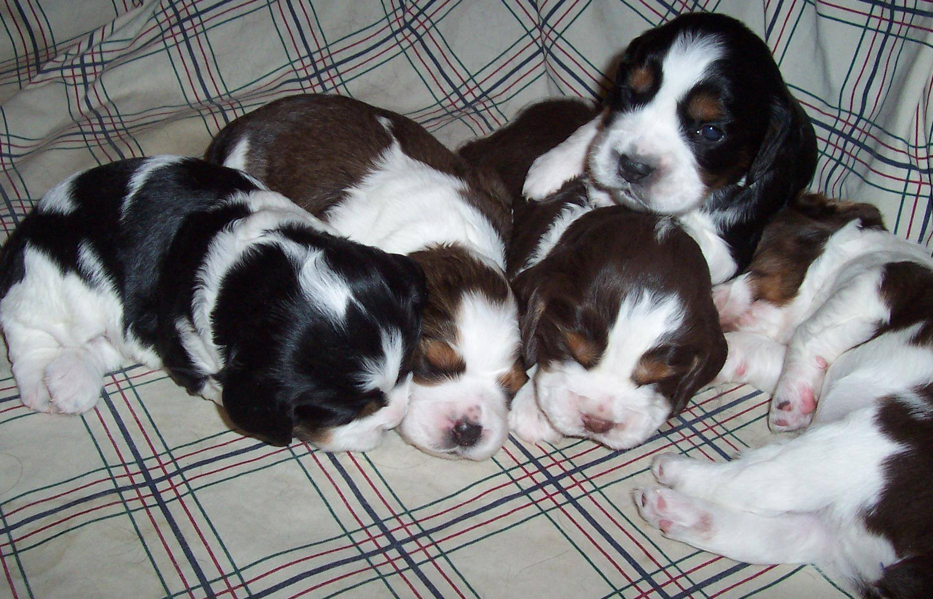 Greg's Pup Pile
