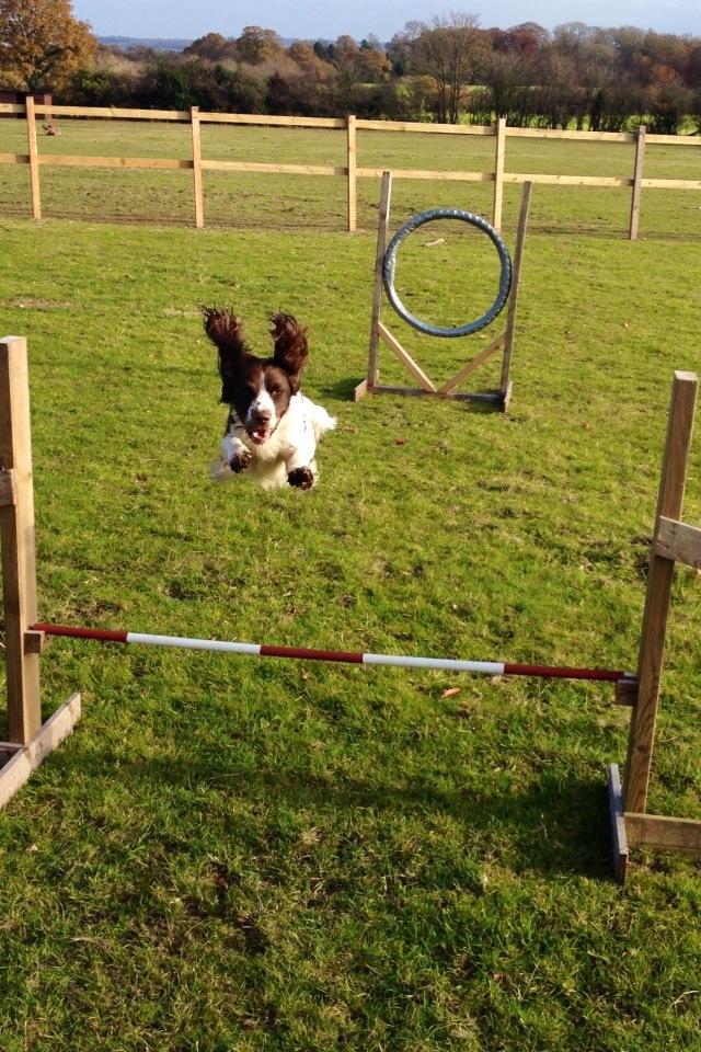 Flying Henry!